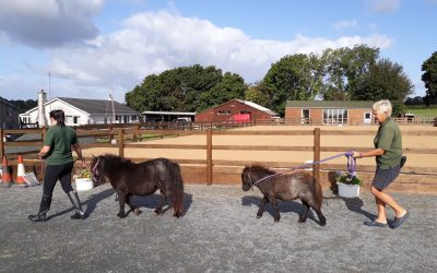Halter Training Our Foals!
