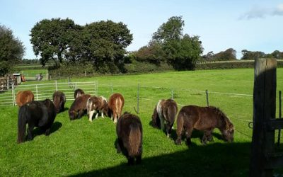 Weaning Day